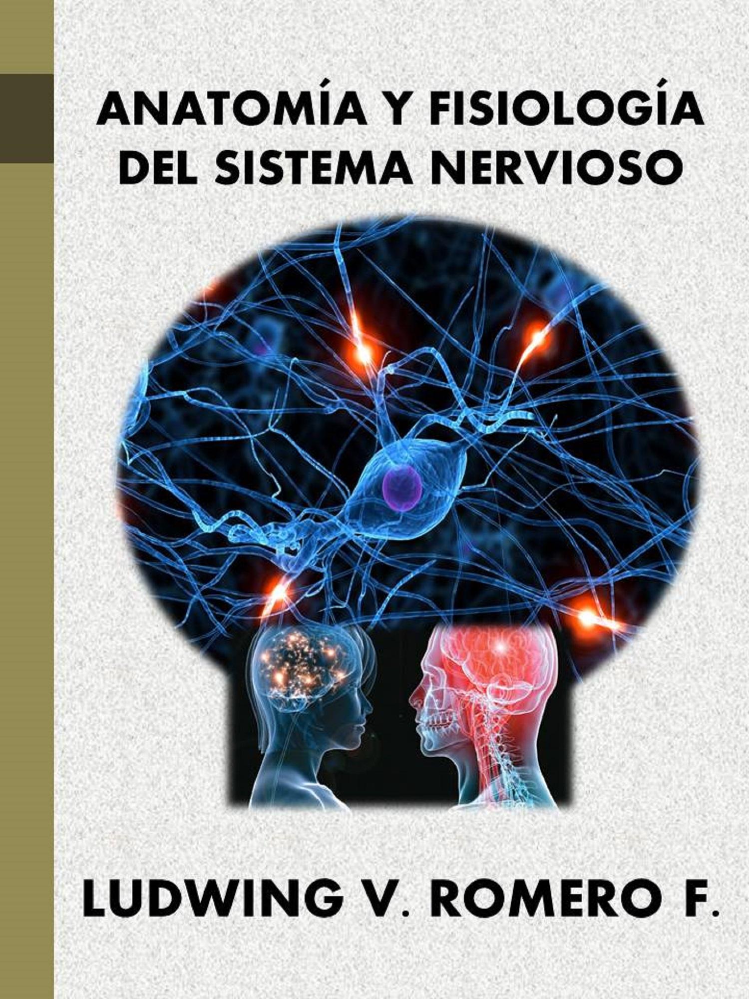 Perfecto Sistema Nervioso Anatomía Y Fisiología Colección - Anatomía ...